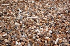 Conchas do mar e moluscos em areias litorais imagens de stock royalty free