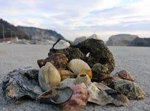 Conchas do mar em formas e em cores diferentes Fotos de Stock