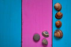 Conchas do mar em um fundo colorido, no quadro e em um fundo delicado para escrever um texto Imagens de Stock