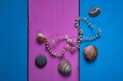 Conchas do mar em um fundo colorido, em quadros e em um fundo glamoroso de duas cores para o espaço para o texto, Fotografia de Stock Royalty Free