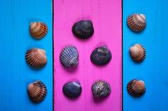 Conchas do mar em um fundo colorido, em uns quadros e em um fundo delicado de duas cores para escrever o texto, Fotografia de Stock Royalty Free