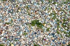Conchas do mar em um Sandy Beach nos detalhes foto de stock