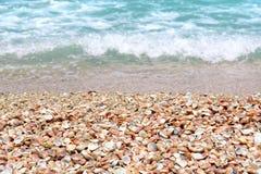 Conchas do mar em um Sandy Beach perto do mar Fotografia de Stock