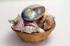 Conchas do mar em uma cesta Fotos de Stock Royalty Free