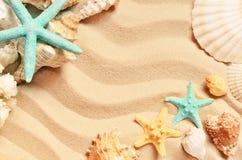 Conchas do mar em uma praia e em uma areia do verão como o fundo Escudos do mar
