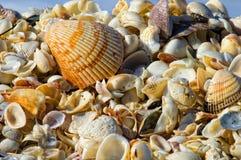 Conchas do mar empilhadas na praia Fotos de Stock Royalty Free