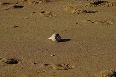 Conchas do mar entre a linha costeira Imagem de Stock Royalty Free