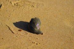 Conchas do mar entre a linha costeira Imagens de Stock Royalty Free