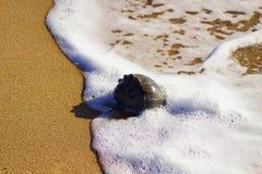 Conchas do mar entre a linha costeira Fotos de Stock