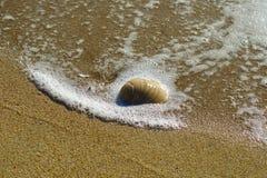Conchas do mar entre a linha costeira Imagem de Stock