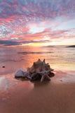 Conchas do mar na costa Fotografia de Stock