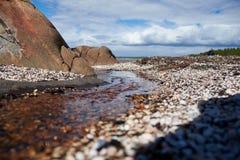 Conchas do mar na costa de mar branco Foto de Stock Royalty Free