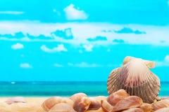 Conchas do mar na praia imagem de stock