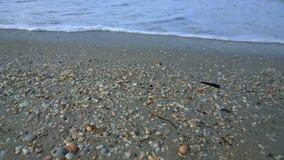 Conchas do mar na praia Imagem de Stock Royalty Free