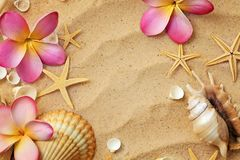 Conchas do mar na praia da areia Foto de Stock