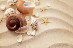 Conchas do mar na praia da areia Fotos de Stock Royalty Free