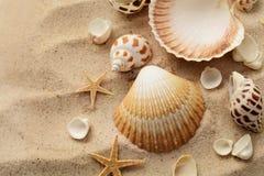 Conchas do mar na praia da areia Fotografia de Stock