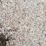 Conchas do mar na praia de Lyngså Imagens de Stock
