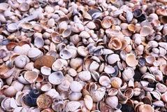 Conchas do mar na praia no tempo ensolarado Detalhes e close-up foto de stock