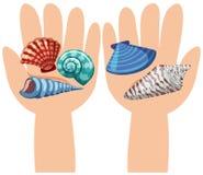 Conchas do mar nas mãos humanas Fotos de Stock Royalty Free