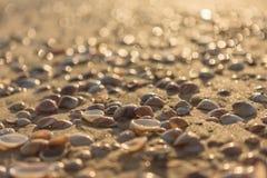 Conchas do mar no fim da areia acima Imagens de Stock Royalty Free