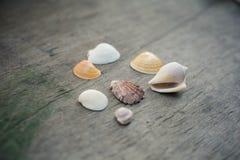 Conchas do mar no fundo de madeira Imagem de Stock