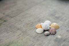 Conchas do mar no fundo de madeira Fotos de Stock Royalty Free