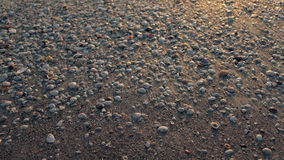 Conchas do mar no papel de parede da praia foto de stock royalty free