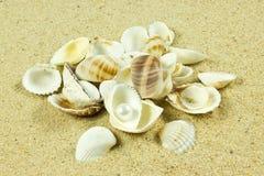 Conchas do mar, pérola, estrela do mar em detalhes da areia Fotografia de Stock Royalty Free