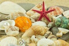 Conchas do mar, pérola, estrela do mar em detalhes da areia de mundo inferior da água Fotografia de Stock