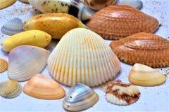 Conchas do mar para o fundo fotografia de stock