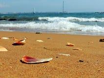 Conchas do mar quebradas na praia do Algarve foto de stock royalty free