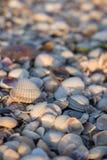 Conchas do mar do rosa e as brancas na luz solar da manhã Conceito dos escudos Escudos na praia do mar imagens de stock royalty free