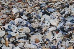 Conchas do mar, seixos e mussles na praia Fotografia de Stock Royalty Free