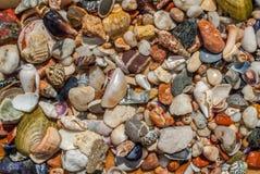 Conchas do mar sortidos e fundo dos seixos fotografia de stock royalty free