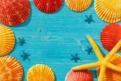 Conchas do mar vermelhas e alaranjadas e estrela do mar amarela em uma tabela azul imagem de stock