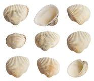 Conchas marinas Imagen de archivo libre de regalías