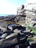 Conchas marinas Foto de archivo libre de regalías
