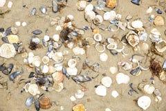 Conchas marinas Imágenes de archivo libres de regalías