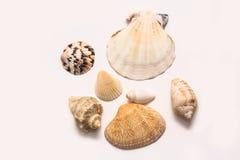 Conchas marinas Fotografía de archivo