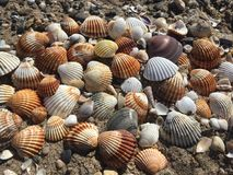 Conchas marinas Imagenes de archivo