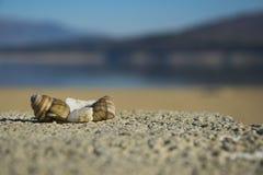 Conchas marinas cerca del agua Imagen de archivo libre de regalías