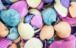Conchas marinas coloreadas antigüedad clasificadas Fotografía de archivo
