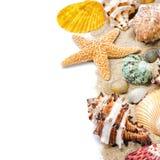 Conchas marinas coloridas en la arena Fotografía de archivo libre de regalías