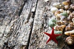 Conchas marinas, crustáceos, estrellas de mar en foco selectivo del primer de madera del fondo Imágenes de archivo libres de regalías