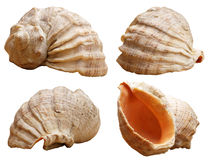 Conchas marinas de las perspectivas distintas Fotos de archivo