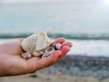Conchas marinas de mano con el fondo azul foto de archivo libre de regalías
