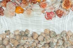 Conchas marinas debajo del agua Fotografía de archivo libre de regalías