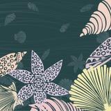 Conchas marinas decorativas Imagen de archivo libre de regalías