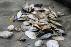 Conchas marinas en arena Imagen de archivo libre de regalías